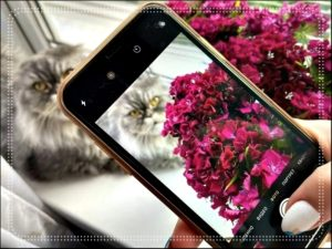 Съёмка Цветка с Котиком